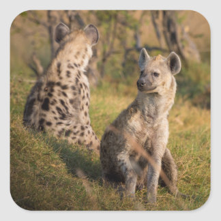 Hyenas Square Sticker