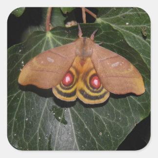 Hyperchiria incisa collectible moth sticker