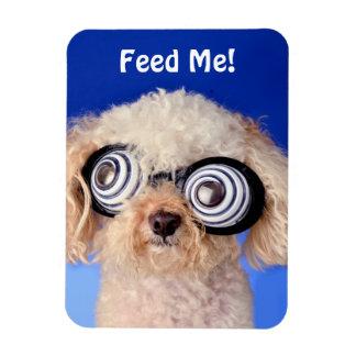 Hypnotic Poodle Rectangular Photo Magnet