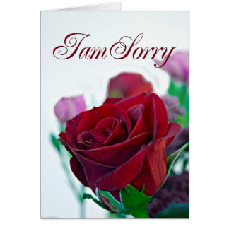 I am sorry card with a red rose