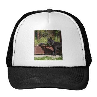 I am the boss cap