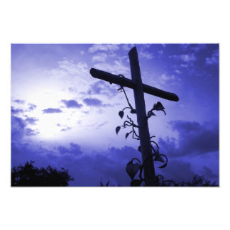 I am the vine you are the branches cross of Jesus Art Photo