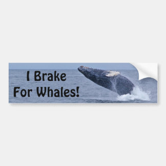 I Brake For Whales! Bumper Sticker