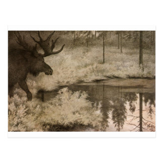 I Came to the Secret Springs and Lakes Where Moose Postcard