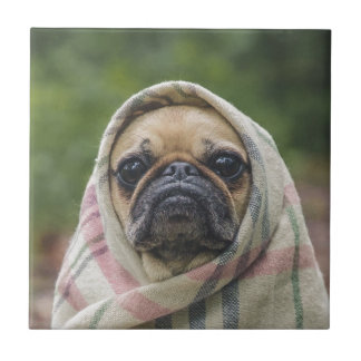 I Come in peace pug dog Tile