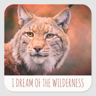 I Dream Of The Wilderness  Bobcat Stickers