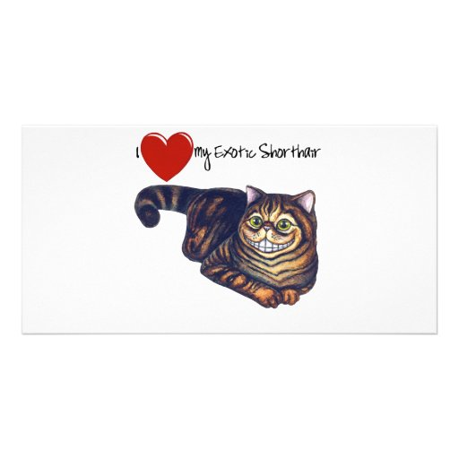 I Heart My Exotic Shorthair Photo Card Template