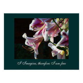 I Imagine therefore I am free art prints gift Lily Print