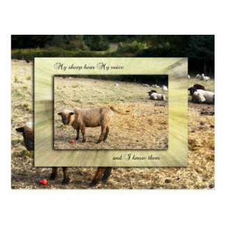 I Know My Sheep Postcard