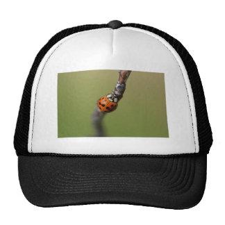 I lost it hats