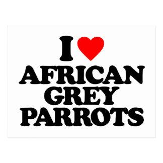 I LOVE AFRICAN GREY PARROTS POSTCARDS