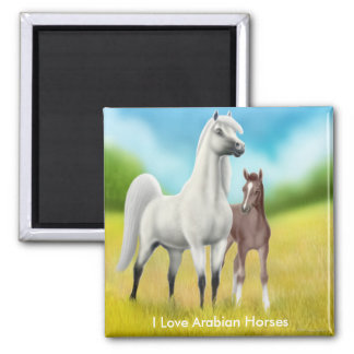 I Love Arabian Horses Magnet