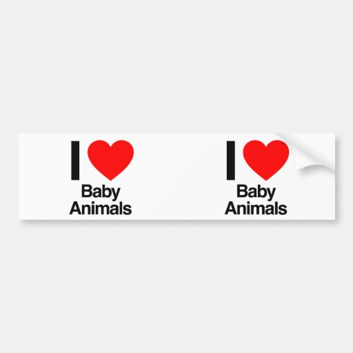 i love baby animals bumper stickers