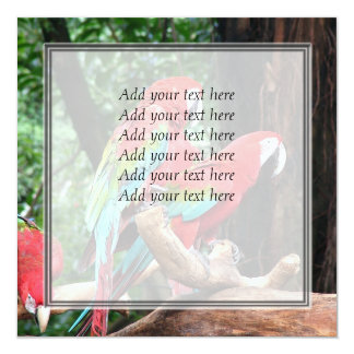 I love beatiful birds!  red and blue parrots 13 cm x 13 cm square invitation card
