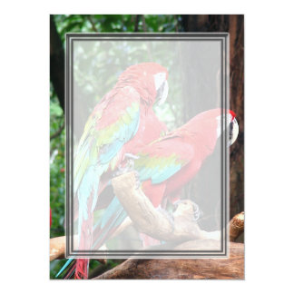 I love beatiful birds!  red and blue parrots 14 cm x 19 cm invitation card