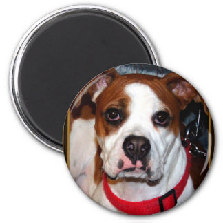 I Love Boxer Collection Refrigerator Magnets