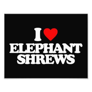 I LOVE ELEPHANT SHREWS PHOTO