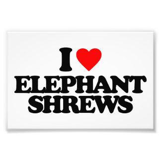 I LOVE ELEPHANT SHREWS PHOTO ART