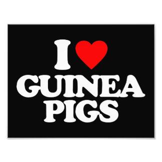 I LOVE GUINEA PIGS PHOTO PRINT