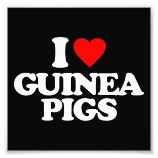 I LOVE GUINEA PIGS PHOTO ART