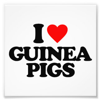 I LOVE GUINEA PIGS PHOTOGRAPHIC PRINT