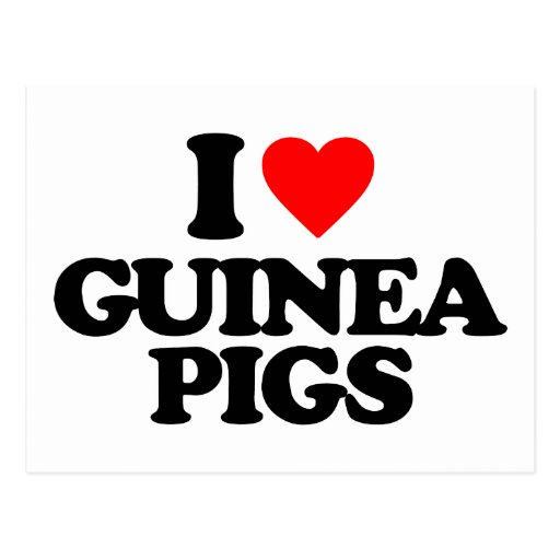 I LOVE GUINEA PIGS POST CARDS