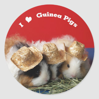 I Love Guinea Pigs Stickers
