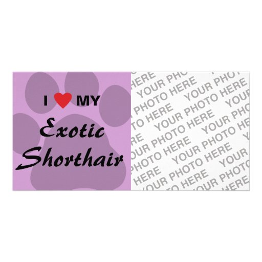 I Love (Heart) My Exotic Shorthair Pawprint Design Photo Greeting Card