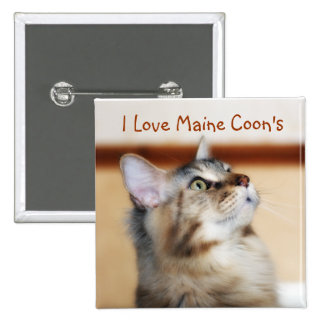 I Love Maine Coon's Badge - Maine Coon Kitten