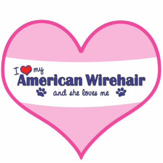 I Love My American Wirehair (Female Cat) Cut Out