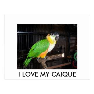 I LOVE MY CAIQUE POSTCARD