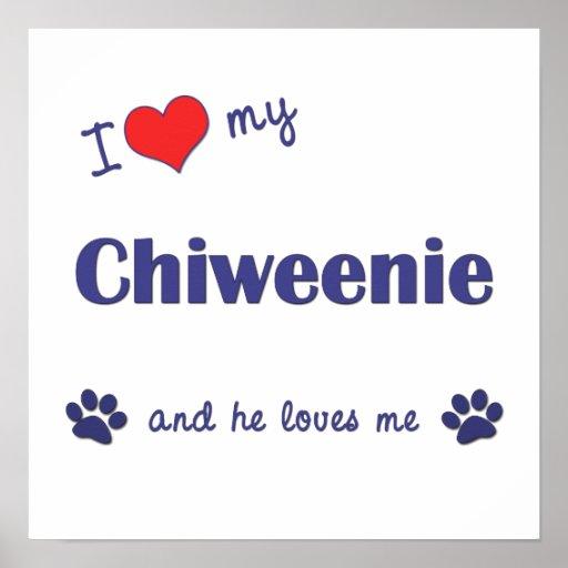 I Love My Chiweenie (Male Dog) Poster Print