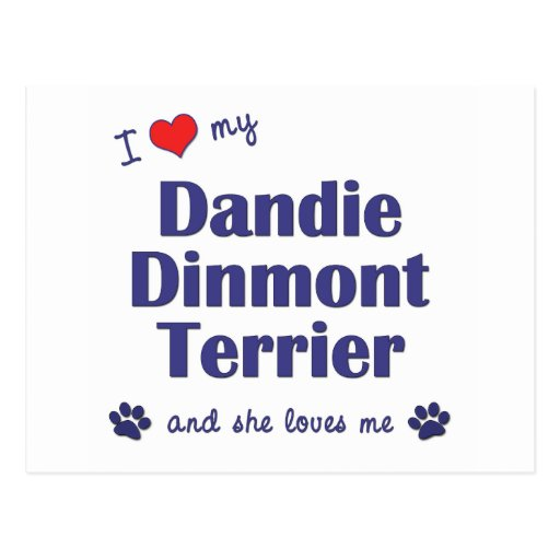 I Love My Dandie Dinmont Terrier (Female Dog) Postcard