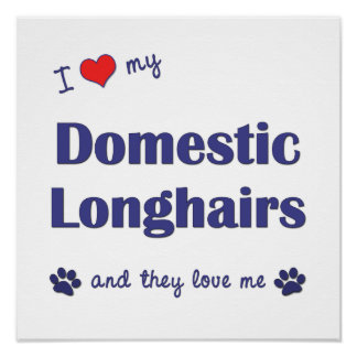 I Love My Domestic Longhairs Multiple Cats Posters
