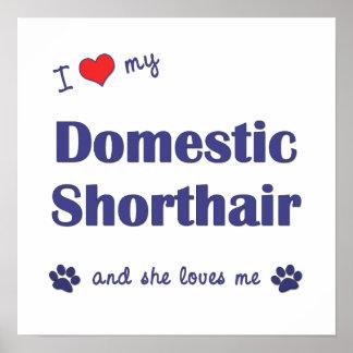 I Love My Domestic Shorthair Female Cat Poster