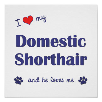 I Love My Domestic Shorthair Male Cat Poster