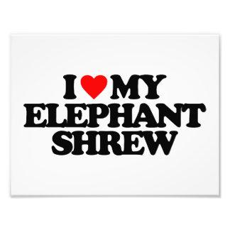 I LOVE MY ELEPHANT SHREW PHOTO