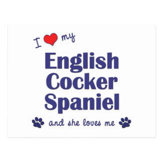 I Love My English Cocker Spaniel (Female Dog) Postcard