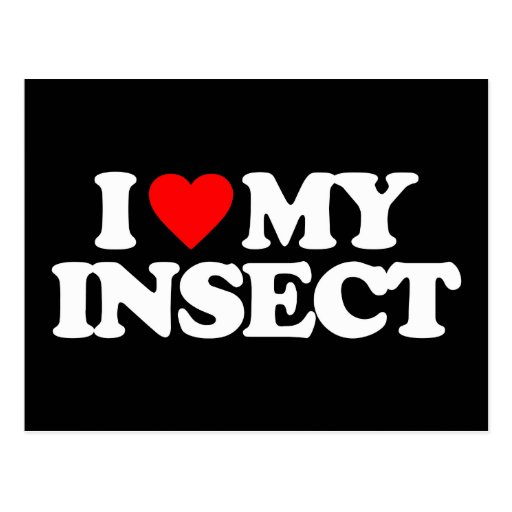 I LOVE MY INSECT POST CARDS