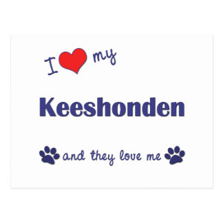 I Love My Keeshonden (Multiple Dogs) Postcard