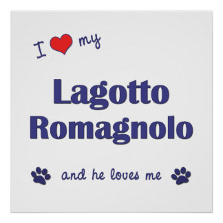 I Love My Lagotto Romagnolo (Male Dog) Print