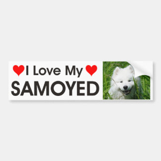 I Love My Samoyed Bumper Sticker