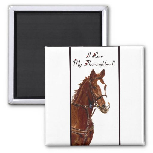 I Love My Thoroughbred! Horse Magnets