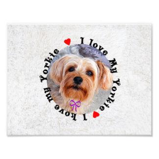 I love my Yorkie Female Yorkshire Terrier Dog Photographic Print