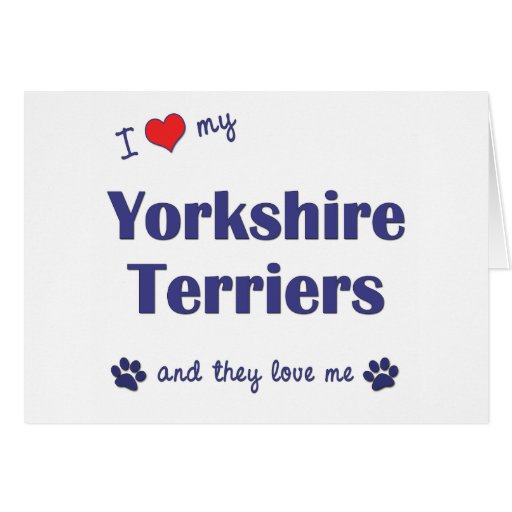 I Love My Yorkshire Terriers (Multiple Dogs) Greeting Card