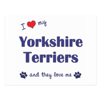 I Love My Yorkshire Terriers (Multiple Dogs) Postcard
