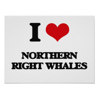 I love Northern Right Whales Poster