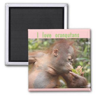 I Love Orangutans Magnet
