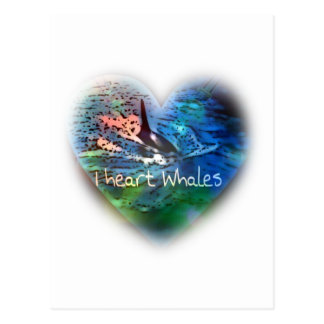I love Orca Whales in heart gifts Postcard