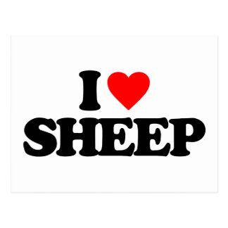 I LOVE SHEEP POST CARDS